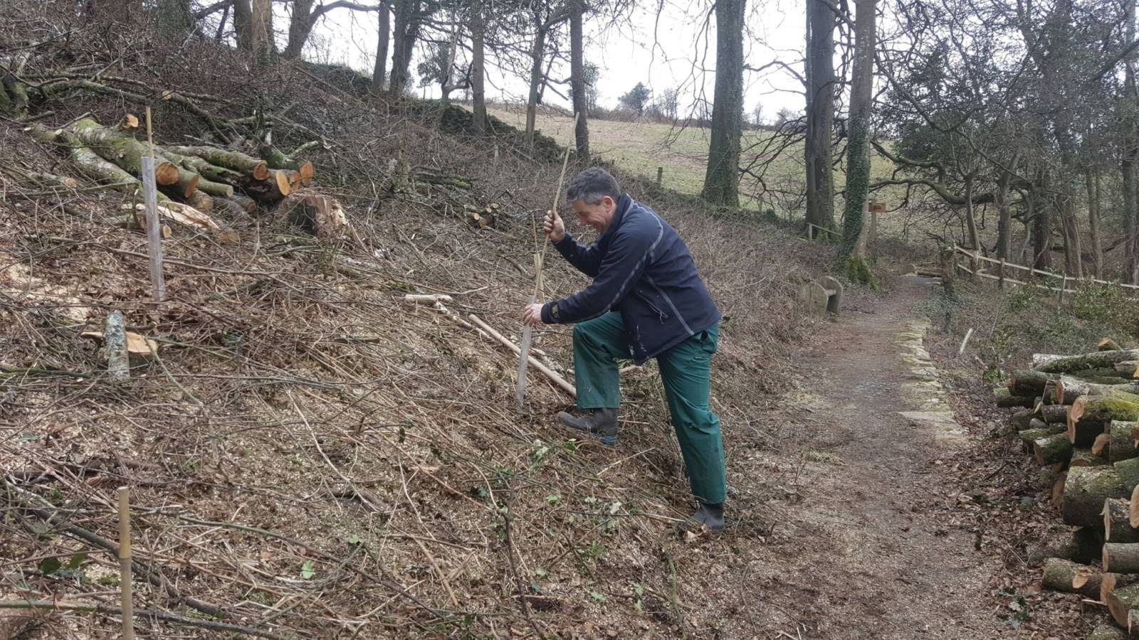 Planting trees in the woodland