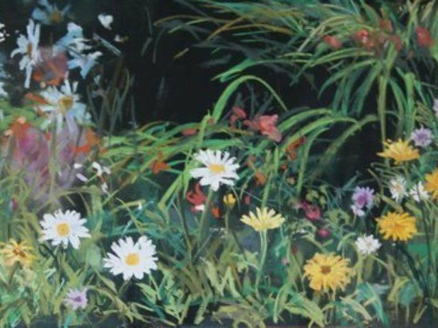 Wild flowers in our garden
