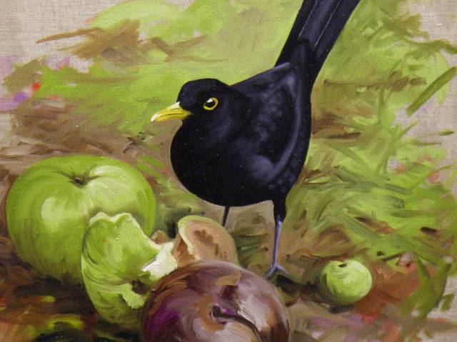 Blackbird with fallen apples