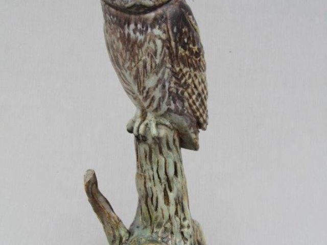 Neil Dalrymple - Little Owl