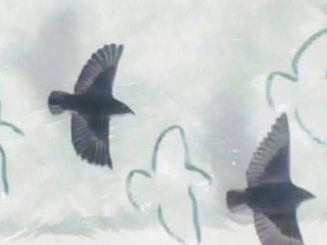 Murmur of Wings I