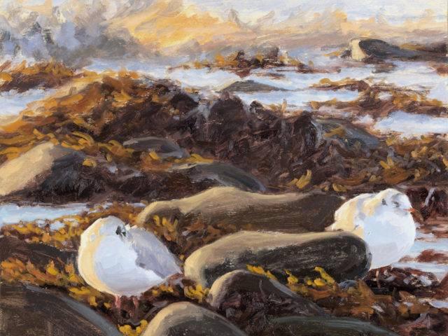 Black headed Gulls on the Shoreline
