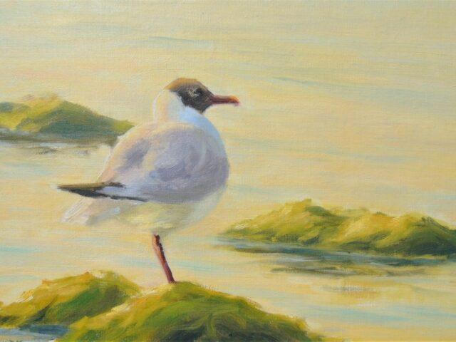 Becky Thorley-Fox: Black Headed Gull, Summer Light (oil on linen, framed)