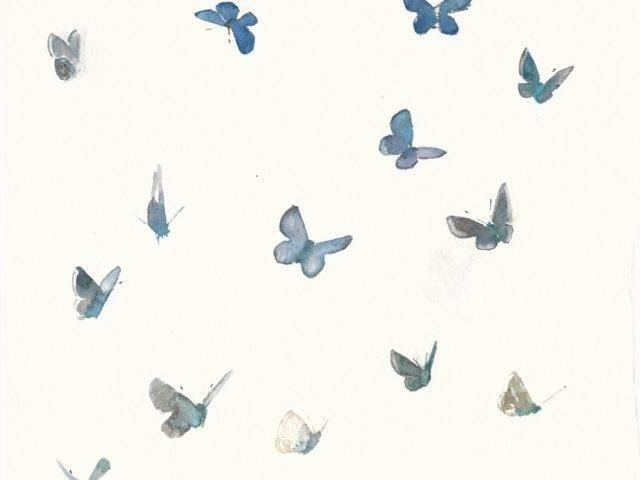 Common blue butterfly studies II, Enlli