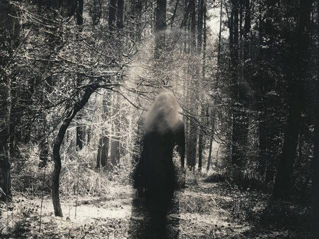 David Heke - In the Woods