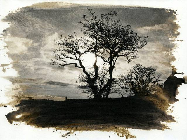 David Heke - The Flight of Blodeuwedd