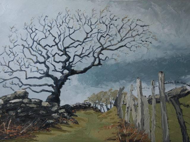 Autumn Hawthorn, Tyddyn Farm
