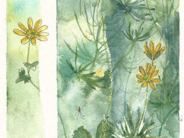 Spiders and celandines, Cristin withy, Enlli