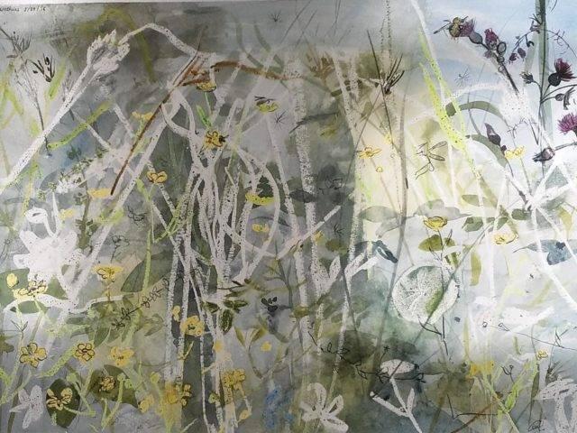 Wetland buttercups study, Tŷ Pellaf Enlli