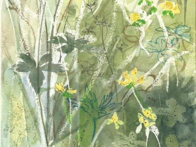 Wetland plants, Enlli