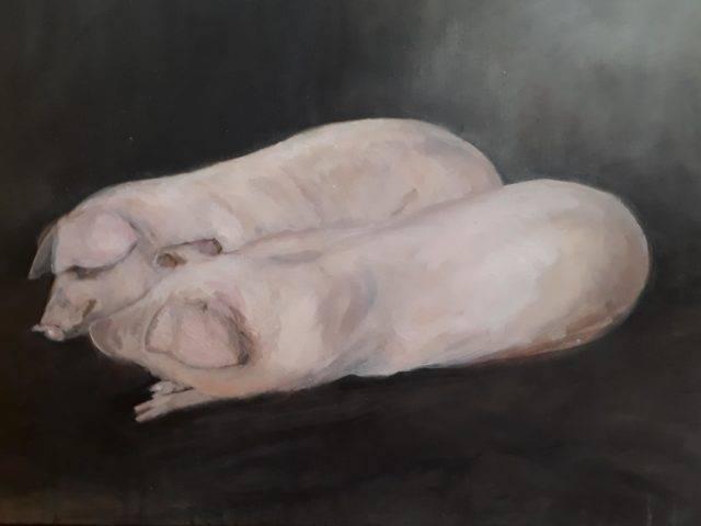 Pigs Dozing
